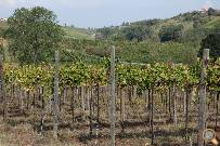 Some of our vineyards
